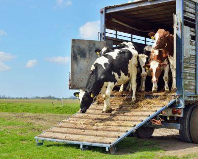 Proteção de Ruminantes e Equinos em Transporte de Longa Duração