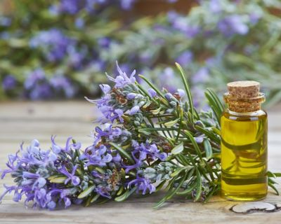 Cultura de Plantas Aromáticas, Medicinais e Condimentares em Modo Produção Biológico