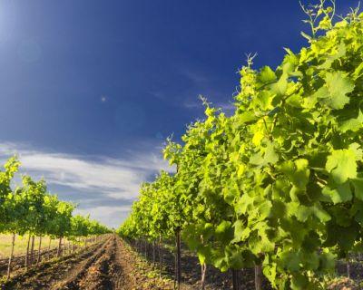 Cultura de Vinha em Modo de Produção Integrado